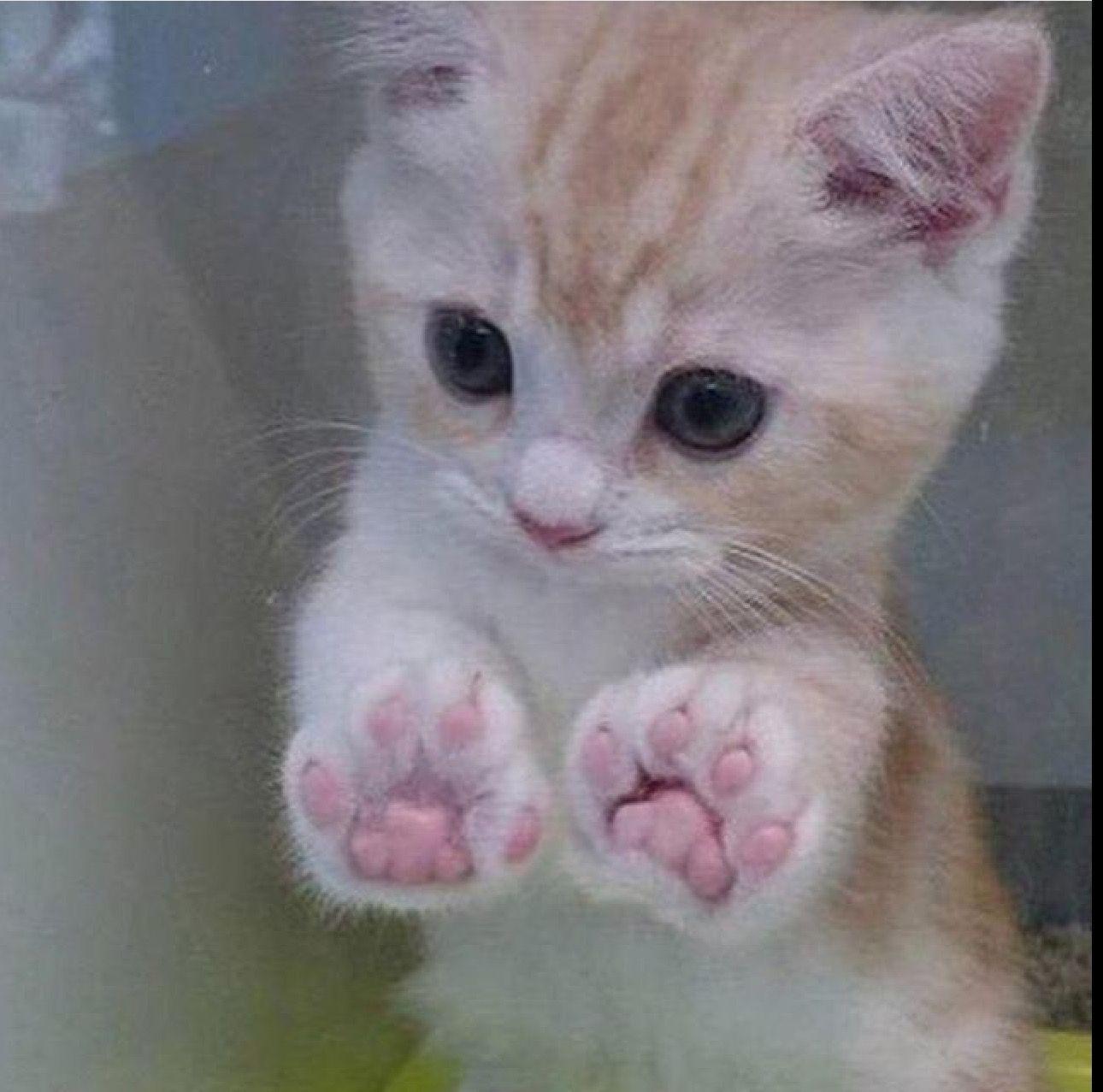 Pin De Mary Milko En Cats Gatos Gatos Bonitos Gatos Lindos Y Tiernos