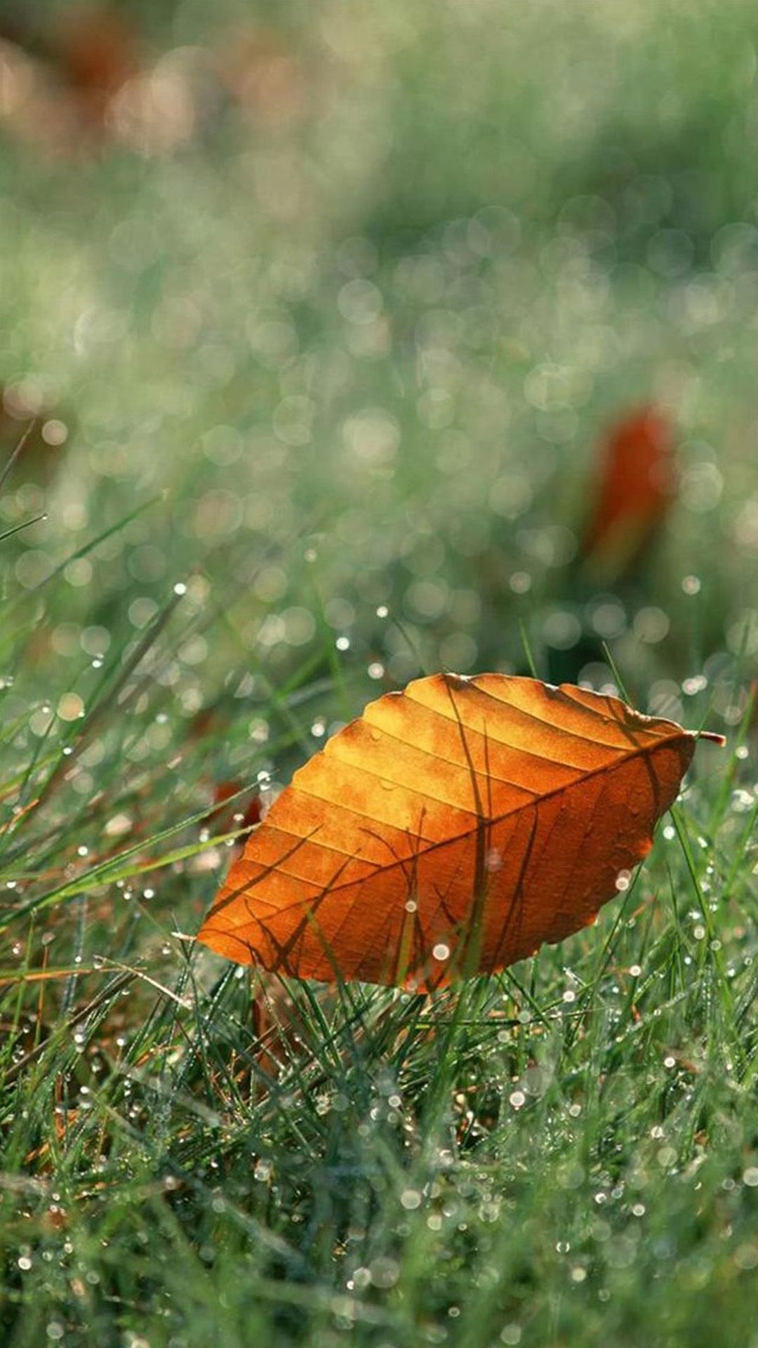 Brown Fall Leaf On Dew Grassland iPhone 6 plus wallpaper
