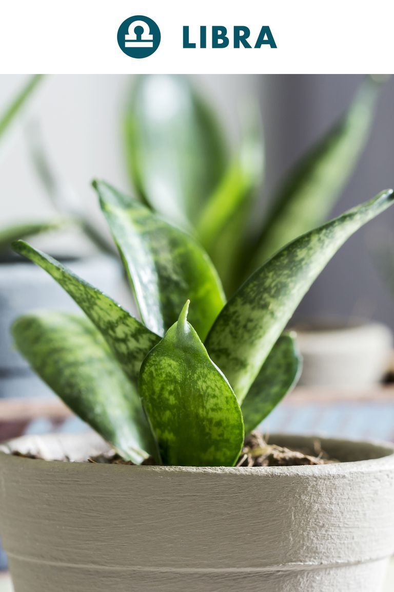 The House Plant To Buy Based On Your Zodiac Sign | Healthy ... on