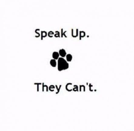 Tattoo Animal Lover Dogs Pets 21+ Ideas #animalrescue