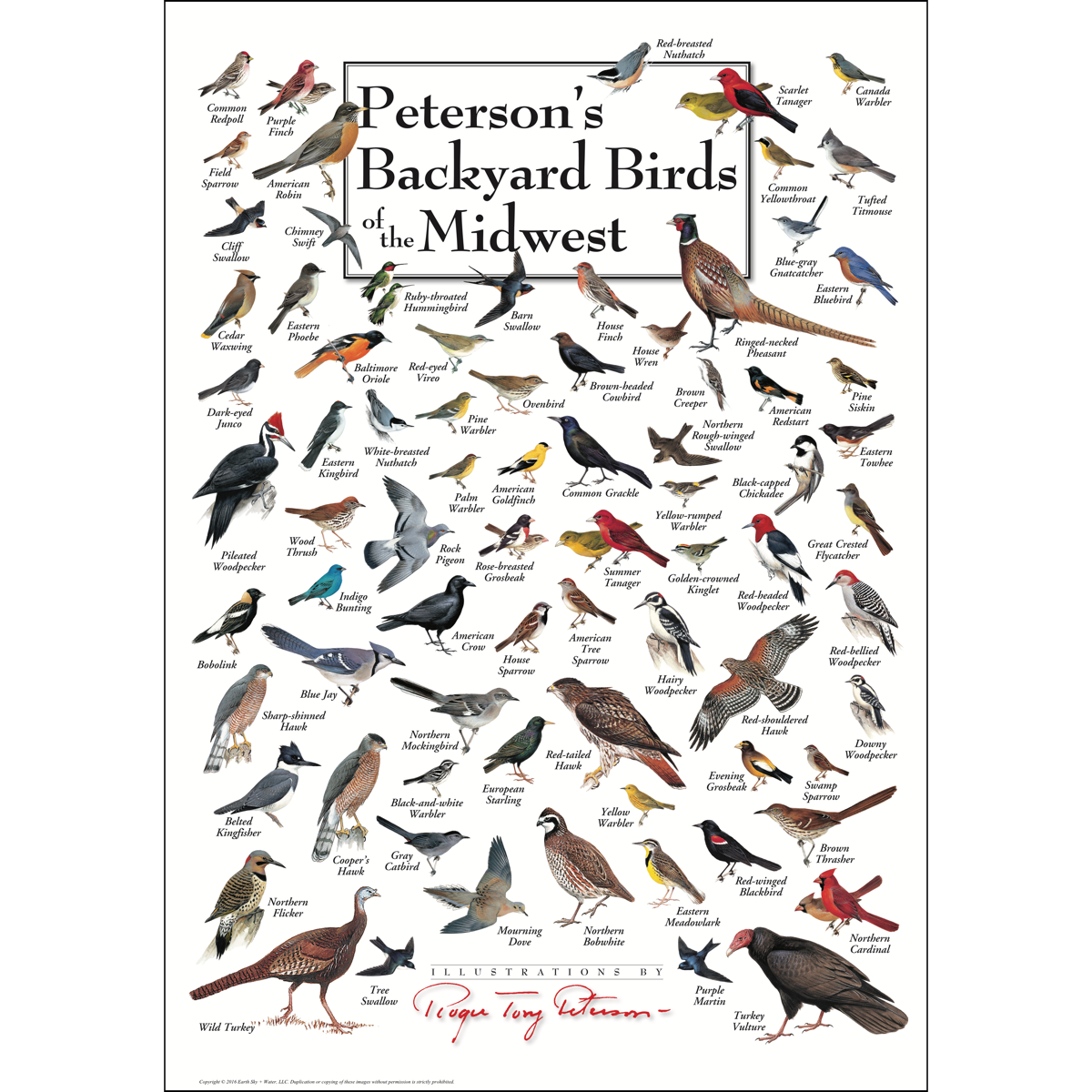 Peterson S Backyard Birds Of The Midwest Poster Backyard Birds Wild Birds Unlimited Birds