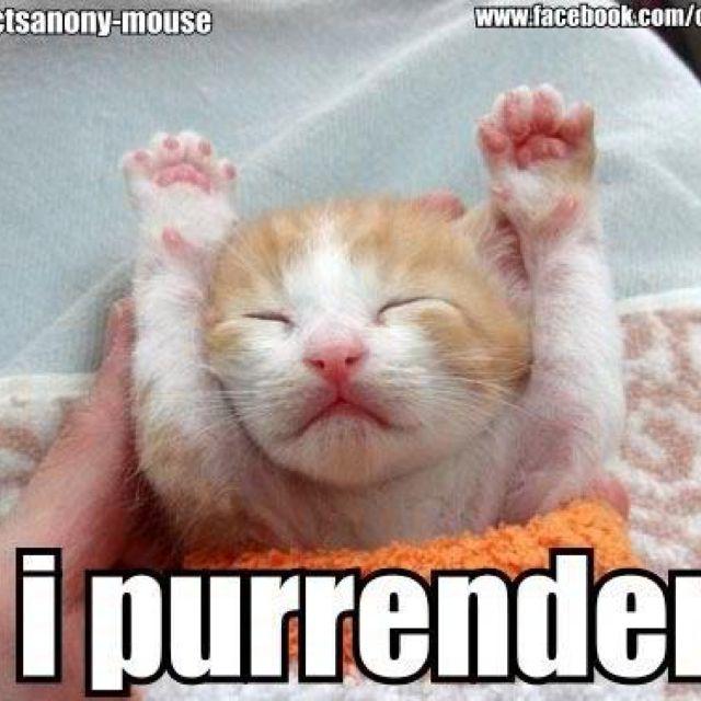 I Purrender!