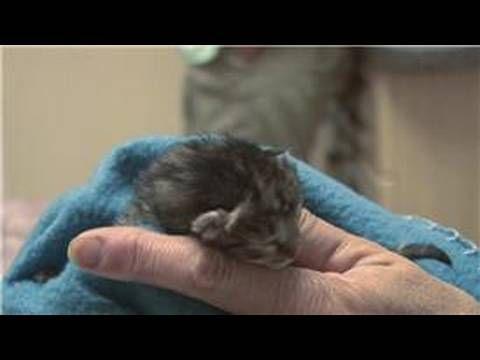 Kitten & Cat Care How to Treat Newborn Kittens With