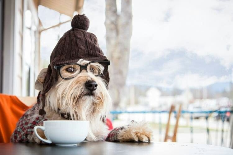 Morning Coffee Dog