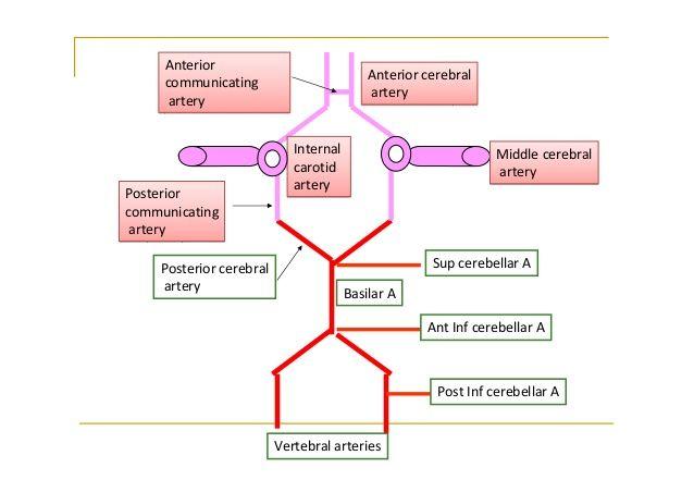 Venous Brain Diagram House Wiring Diagram Symbols