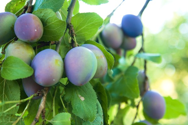 What Time Of Year Do You Plant Fruit Trees Fruit Trees Trees To Plant Fruit