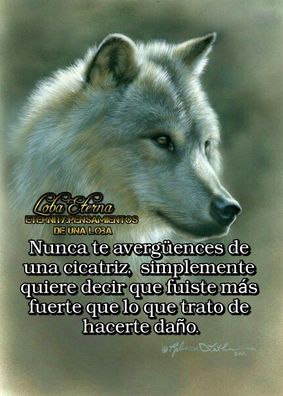 Astuto Amor De Lobo Frases De Lobos Y Lobos