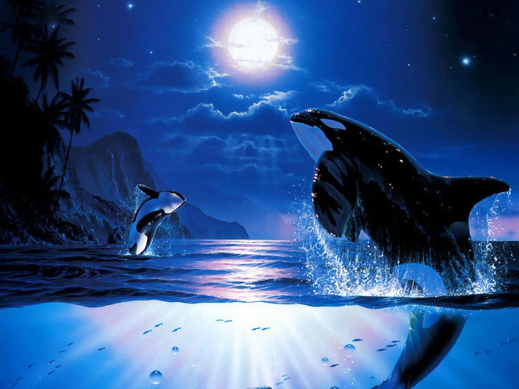 Orcas have always been my favorite animal above all art killer whale dance whales wallpaper id 1194272 desktop nexus animals altavistaventures Image collections
