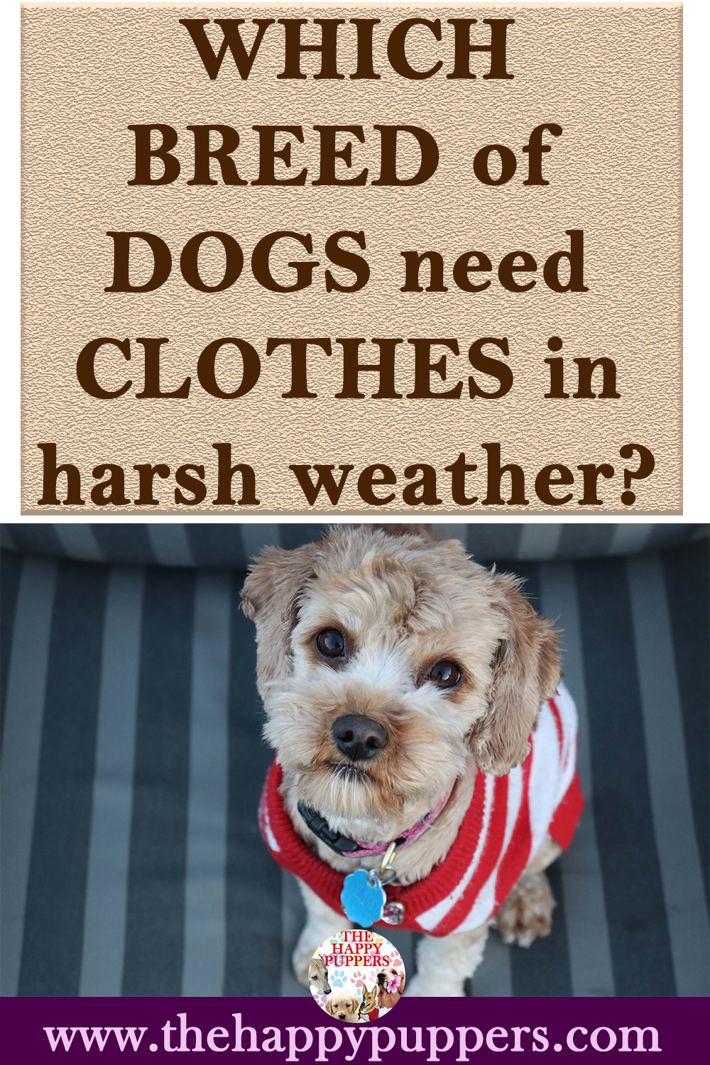 Which breed of dogs needs clothes in harsh weather? -    Click on the image to find out which breeds of dogs need clothes and which breed can survive without the same in cold weather. Do dogs need clothes | do dogs feel cold | why dogs need clothes | #dogclothes #dogs #pup #clothes   Which breed of dogs needs clothes in harsh weather?  The Happy Puppers | Dog nutrition and care tips | Dog videos   shrutibhattacharya_art Animals Are Too Cute Click on the image to find out which breeds of dogs ne