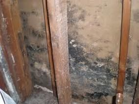 How To Remove Mold From Drywall Mold Remover Remove Black Mold Cleaning Mold