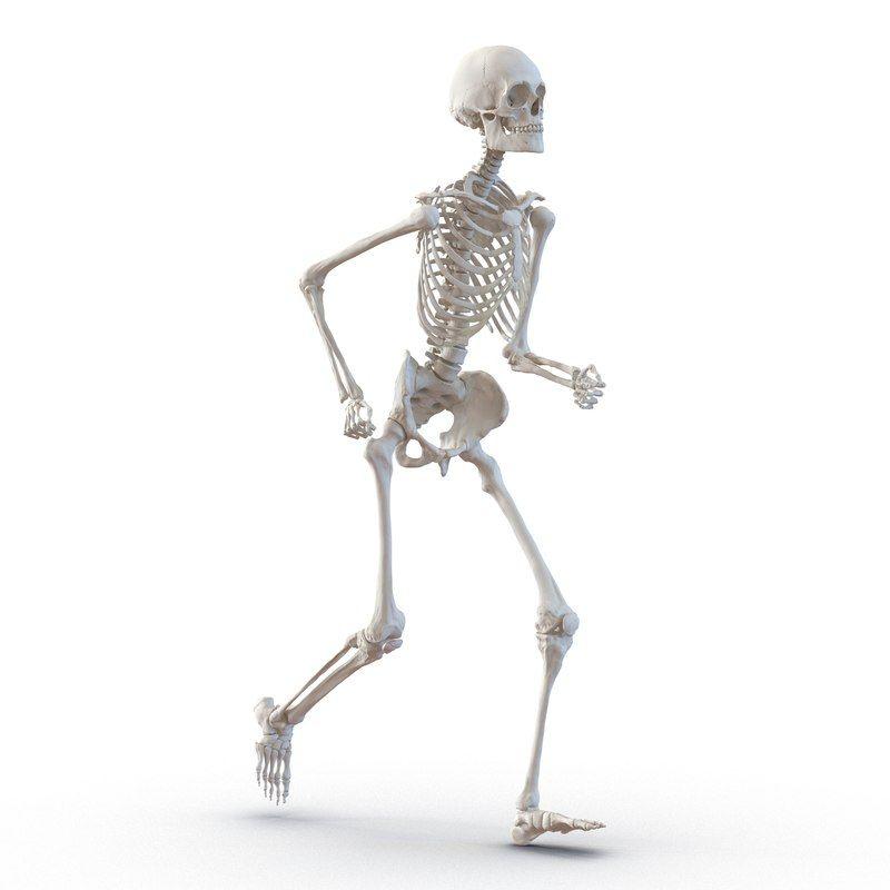 Human Male Skeleton Running Pose 3d Model Human Skeleton Male Skeleton Skeleton