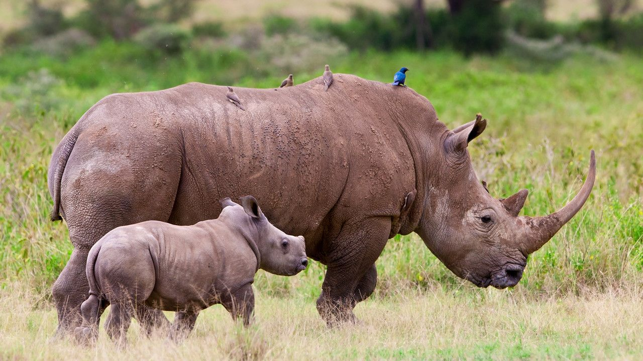 14++ Endangered animals in africa images