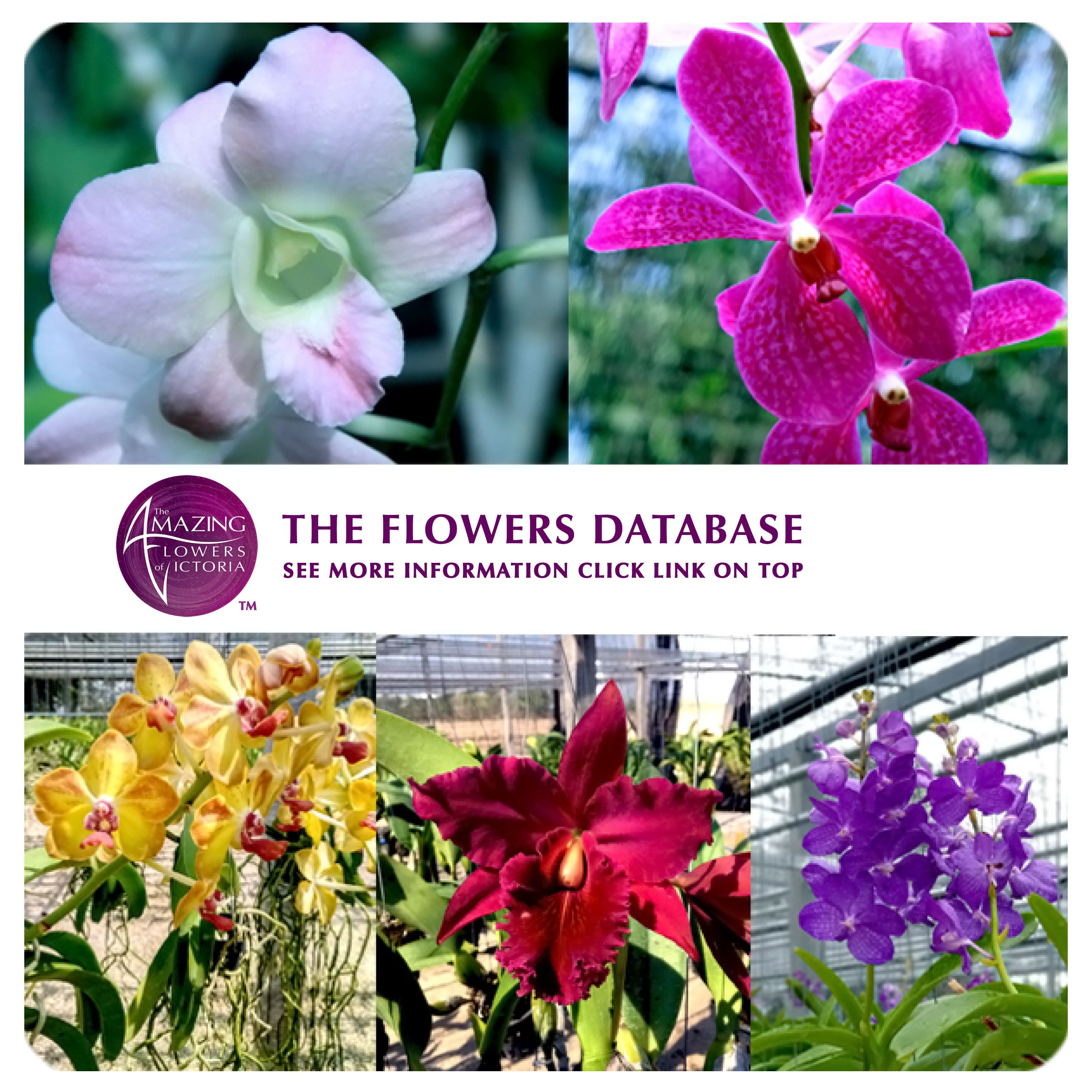 Our Flower Data Base Available Now On The Link Above In 2020 Orchids Amazing Flowers Wholesale Flowers