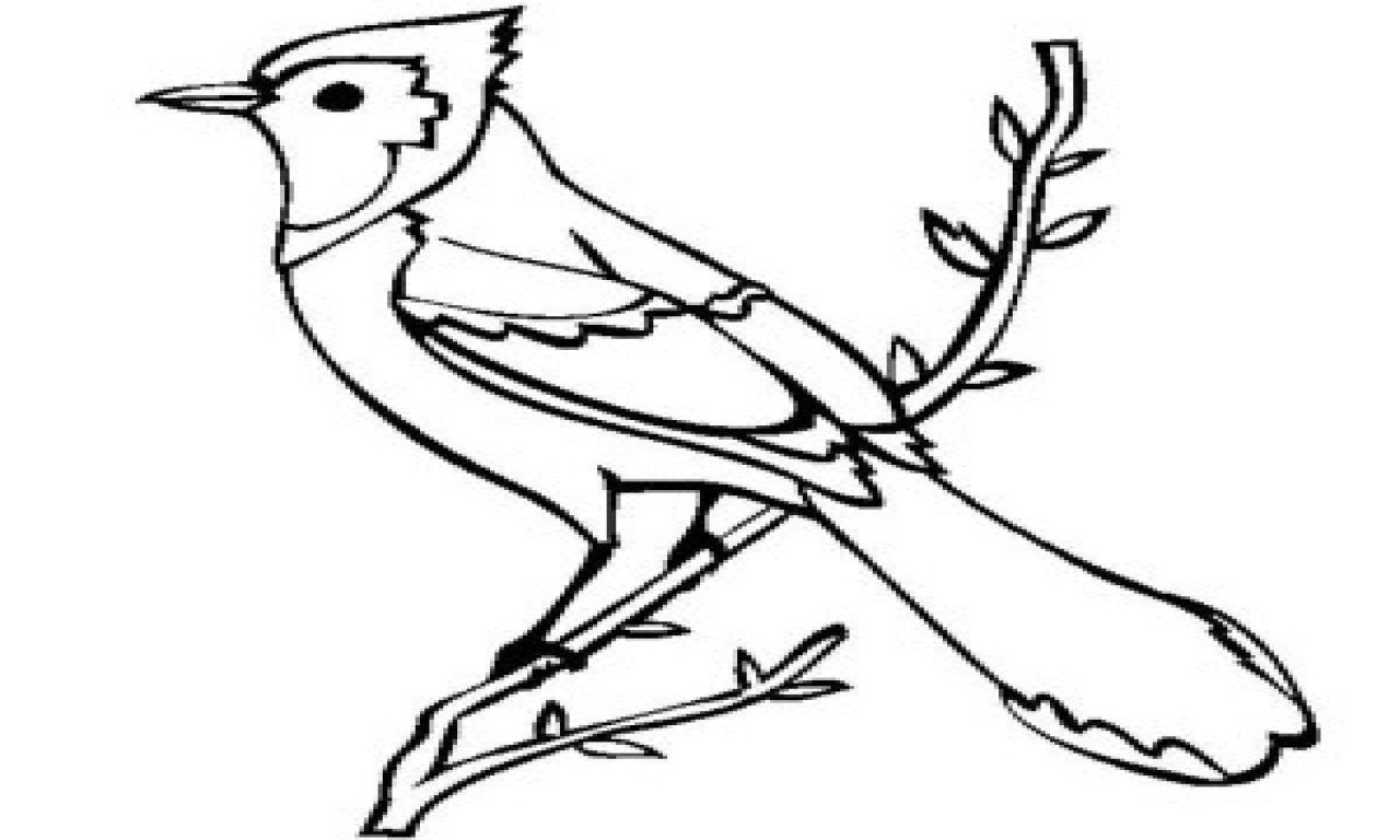 10 Images Of Blue Jays Coloring Pages Coloring Images Pages
