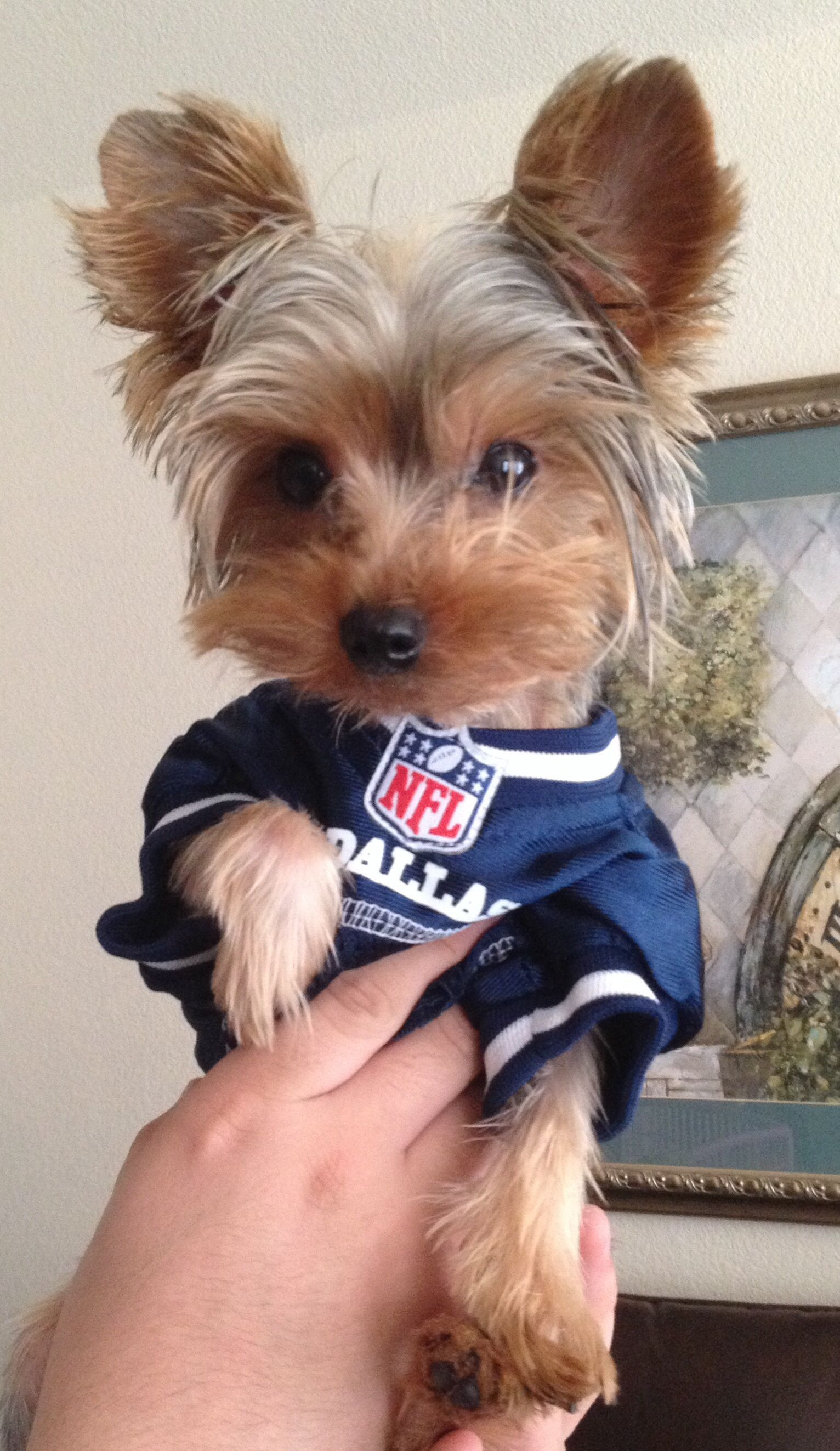 more photos c307b 83f51 This pup might be our tiniest fan! | 4-Legged Fans | Dogs ...