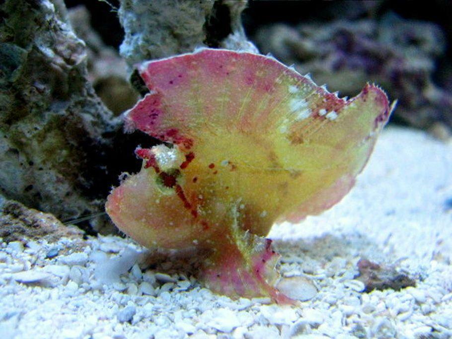 Most Beautiful Saltwater Fish ( All Time ) | RateMyFishTank.com