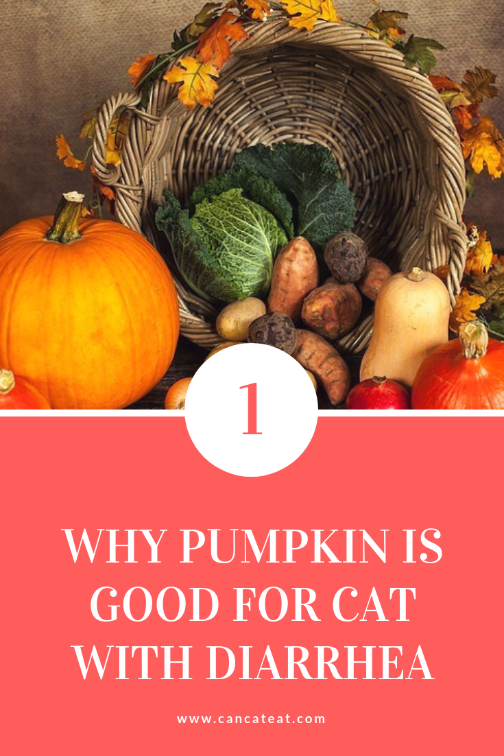 can cats eat pumpkin with diarrhea. you could add pumpkins