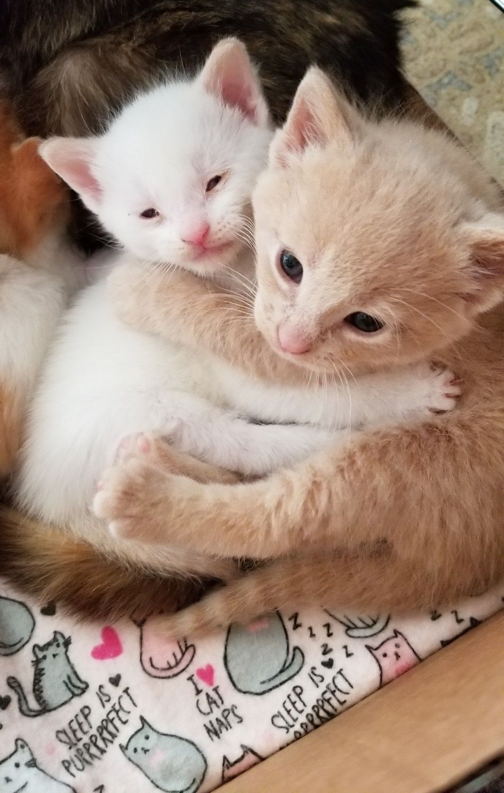 Hugging Box Full Of Kitty Love Cute Cat Gif Cute Animals Puppies Cats And Kittens
