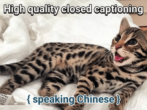 Tus memes Cute funny animals, Cat breeds, Great cat