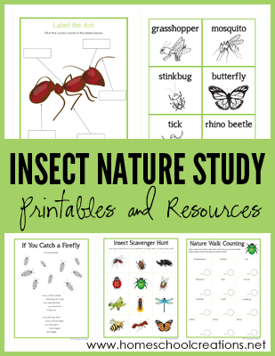 insect nature study printables learning about bugs more nature study homeschool and free. Black Bedroom Furniture Sets. Home Design Ideas