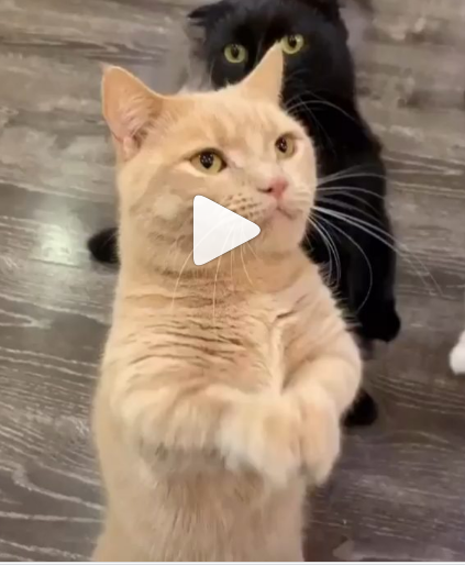 Who can stand like me | cute kittens