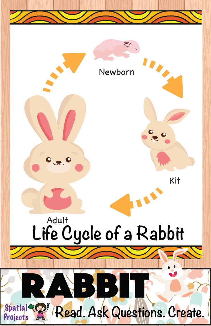 Life Cycle of the Rabbit (Forest Animal) - Inquiry-based learning *Includes  lapbook making guide, craft pattern… | Rabbit crafts, Craft patterns,  Animal life cycles