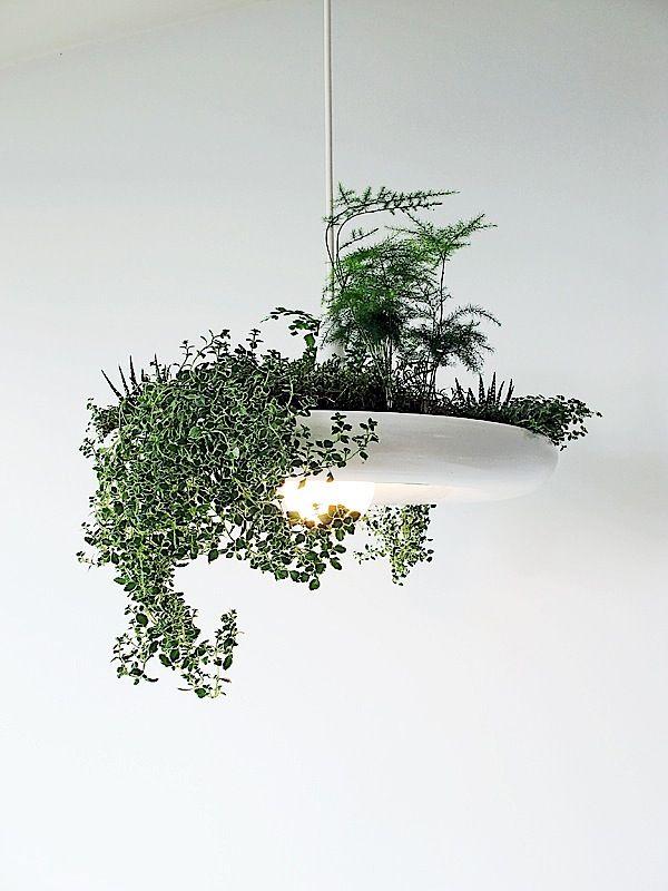 Eine Lampe Mit Pflanzen Von Ryan Taylor Pflanzen Hangender Garten Hangende Pflanzen