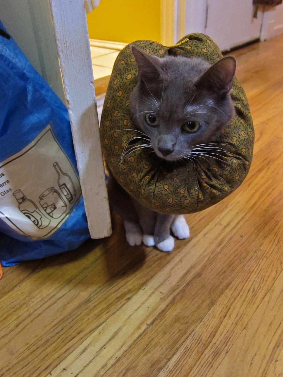 Padded Cat Collar 1 Cat Collars Cat Diy Christmas Cat Collar