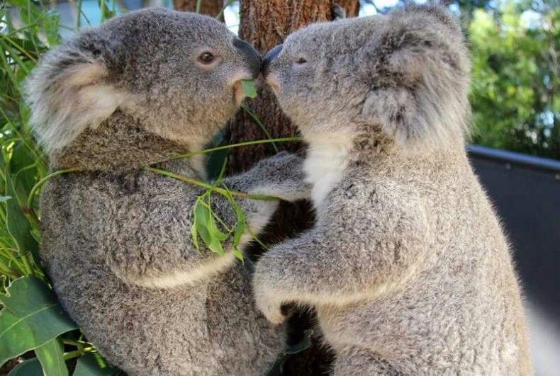 Valentine's day in Taronga Zoo
