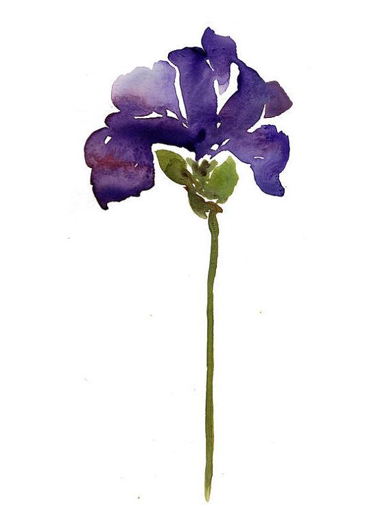 Royal Iris Watercolor Painting Botanical Art By Kianamosleystudio