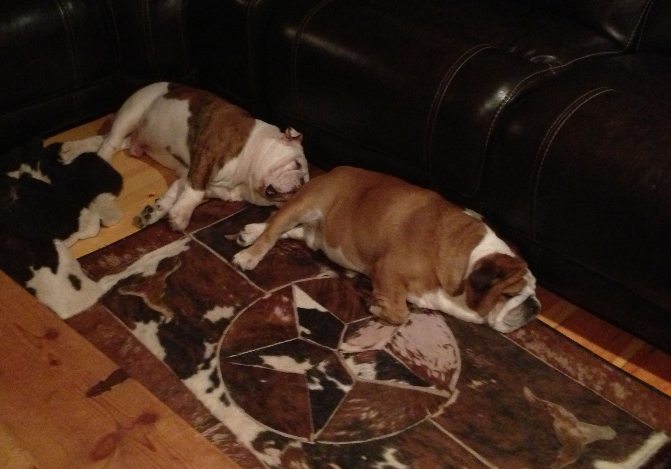 Our Bulldogs Fabio And Henry They Are Always Next To Each Other English Bulldog Puppies Bulldog Bulldog Puppies For Sale