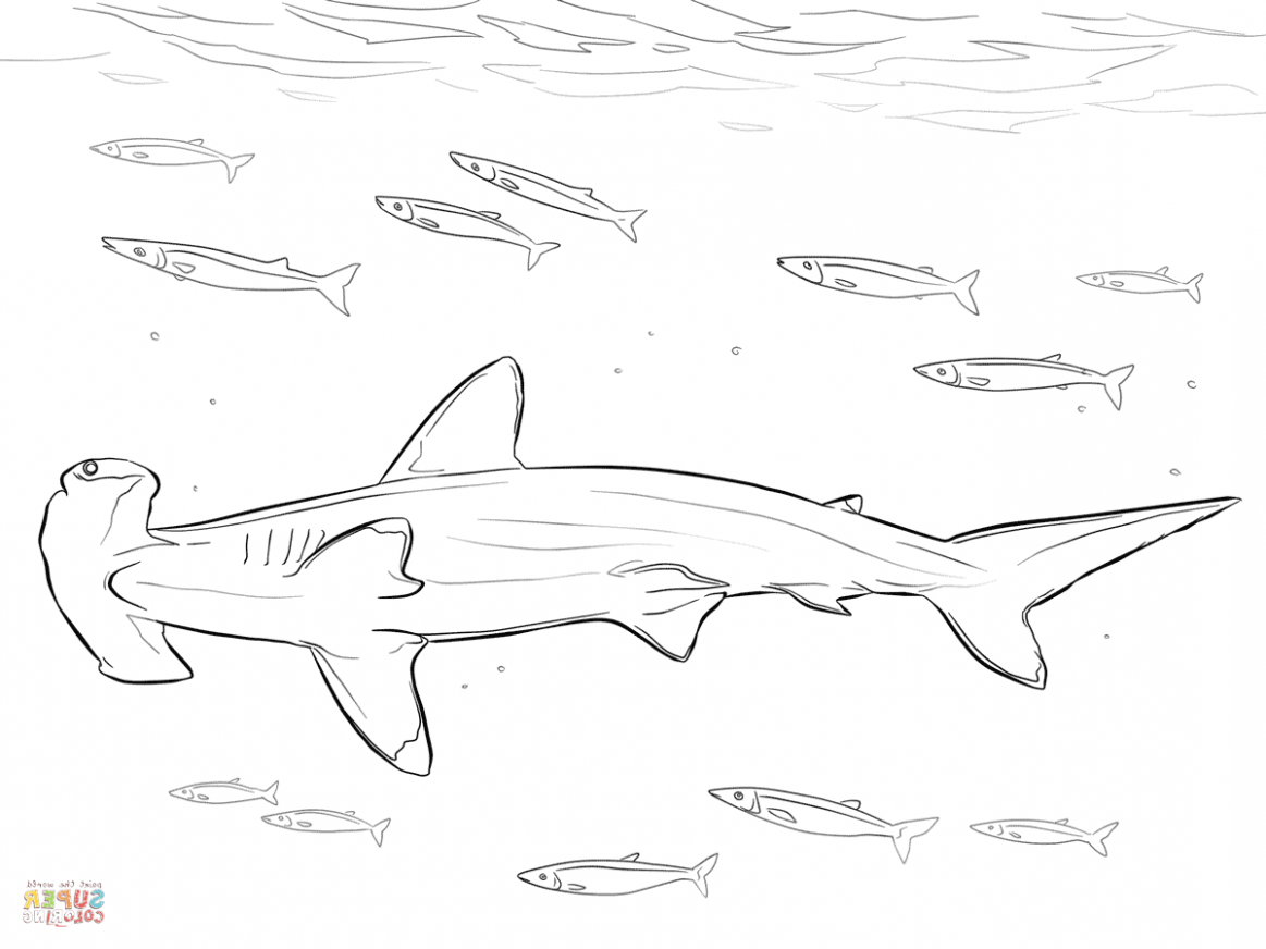 Top 20 Fantastic Experience Of This Years Baby Hammerhead Shark Coloring Page Coloring In 2020 Shark Coloring Pages Coloring Pages Line Artwork