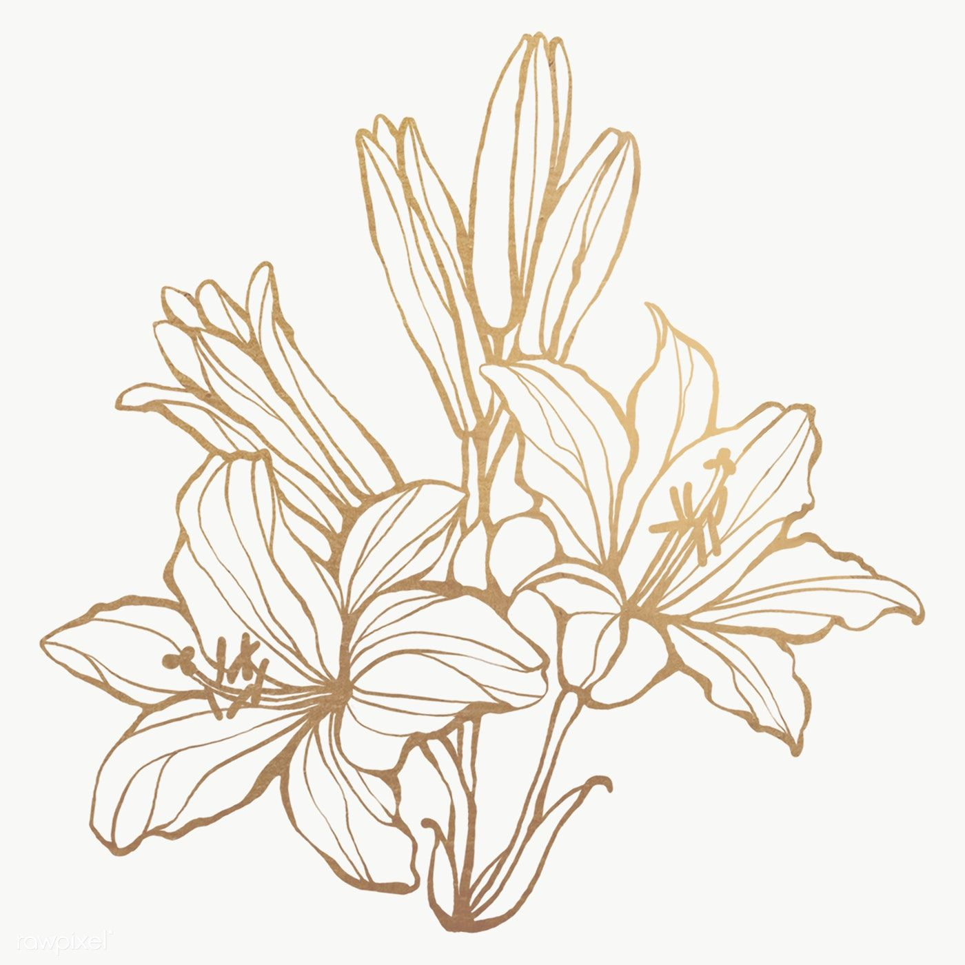 Gold Floral Outline Transparent Png Premium Image By Rawpixel Com Nunny Line Art Flowers Leaf Outline Flower Outline