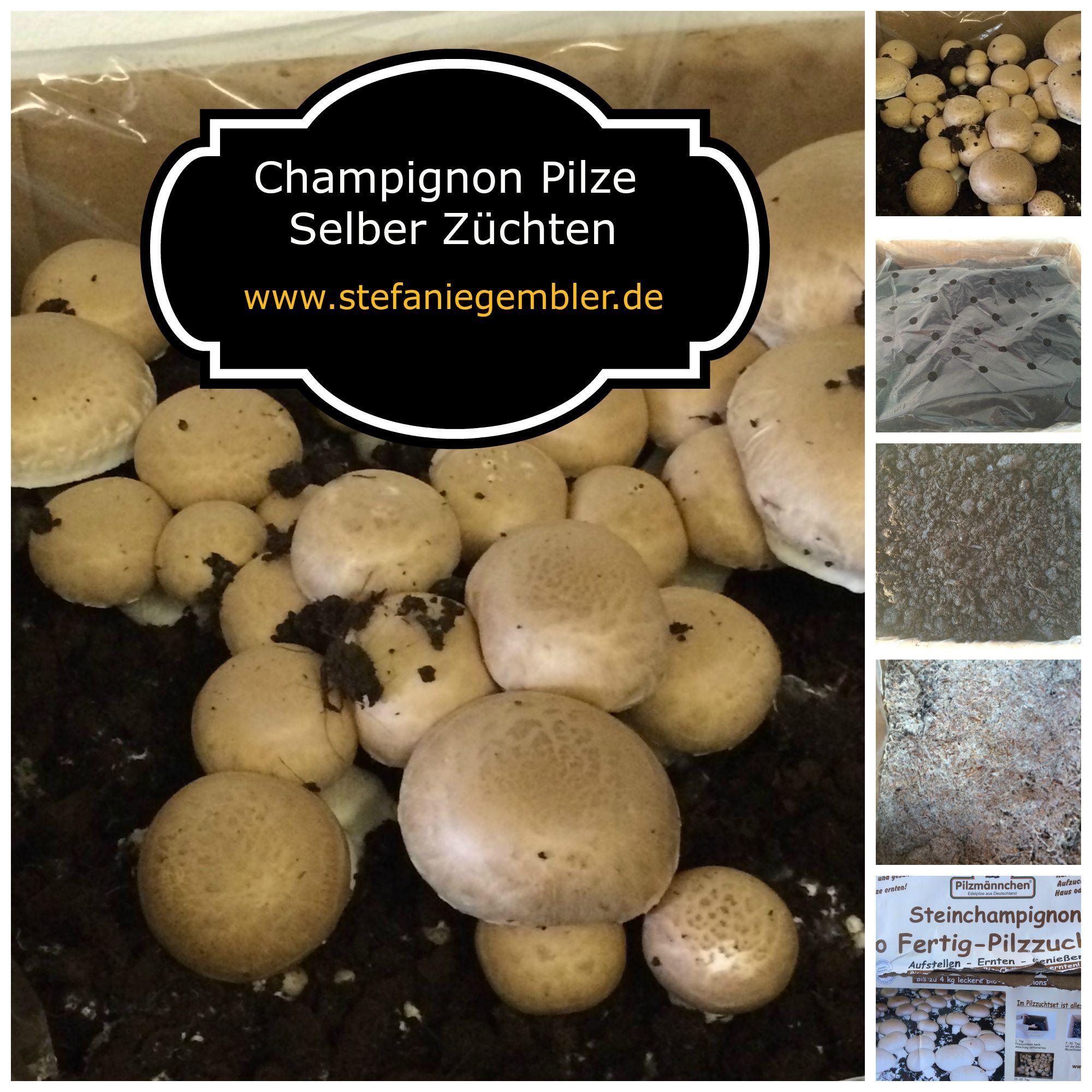 Champignon Pilze Selber Züchten | Garten | Pinterest Fleischfressende Pflanzen Zuhause Zuchten