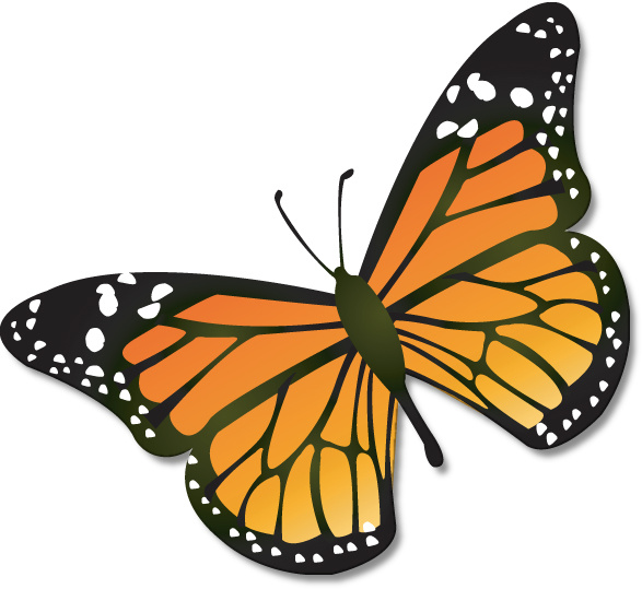 Free Monarch Butterfly Drawing Download Free Clip Art Free Clip Art On Clipart Library Butterfly Clip Art Butterfly Drawing Monarch Butterflies Art
