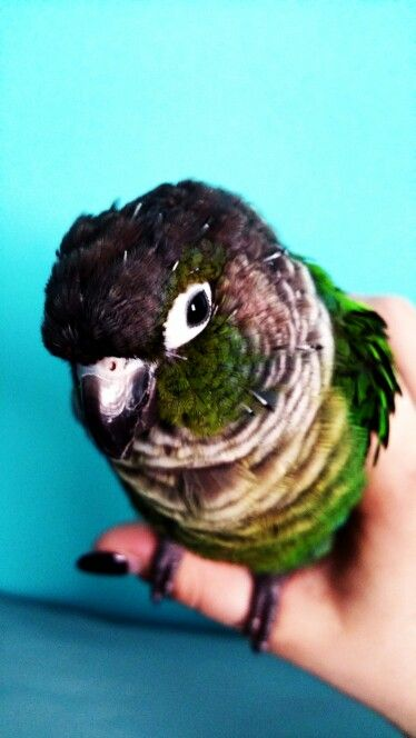 Molting Time   Animals, Birds, Parrot