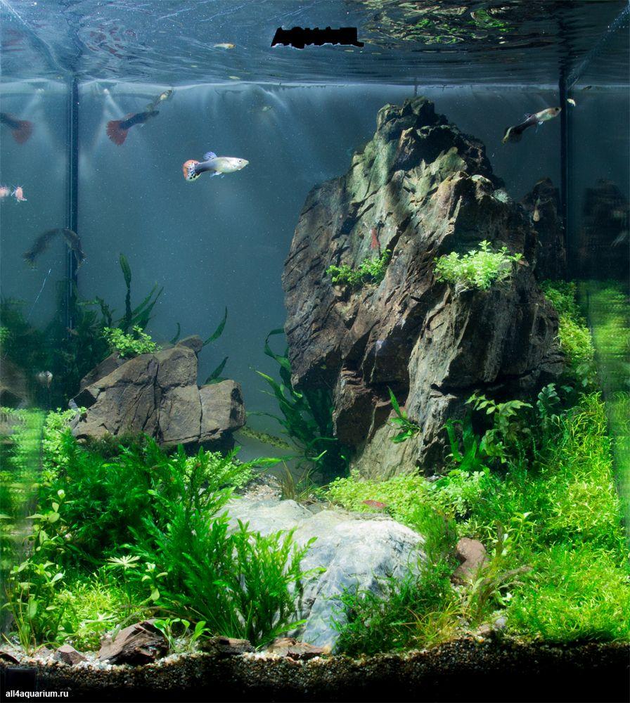 Роман Зеленцов (Новосибирск, Россия) Объем аквариума: 30 л