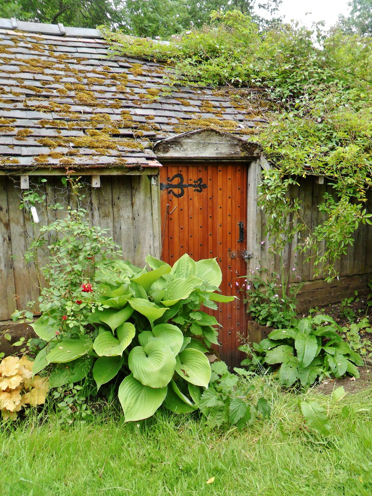 vwcampervan-aldridge: Overgrown Boathouse, Shugborough Hall ...