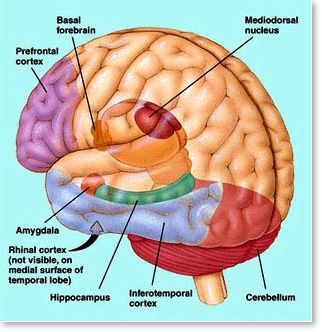 PTSD affects the hippocampus, amygdala, and pre-frontal cortex ...