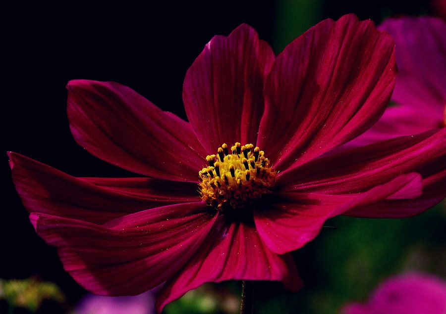 Dark Pink Flowers Tumblr Hd Images 3 Hd Wallpapers Amagico Pink