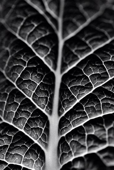 Texture Is Shown Through The Veins And Contrast Between