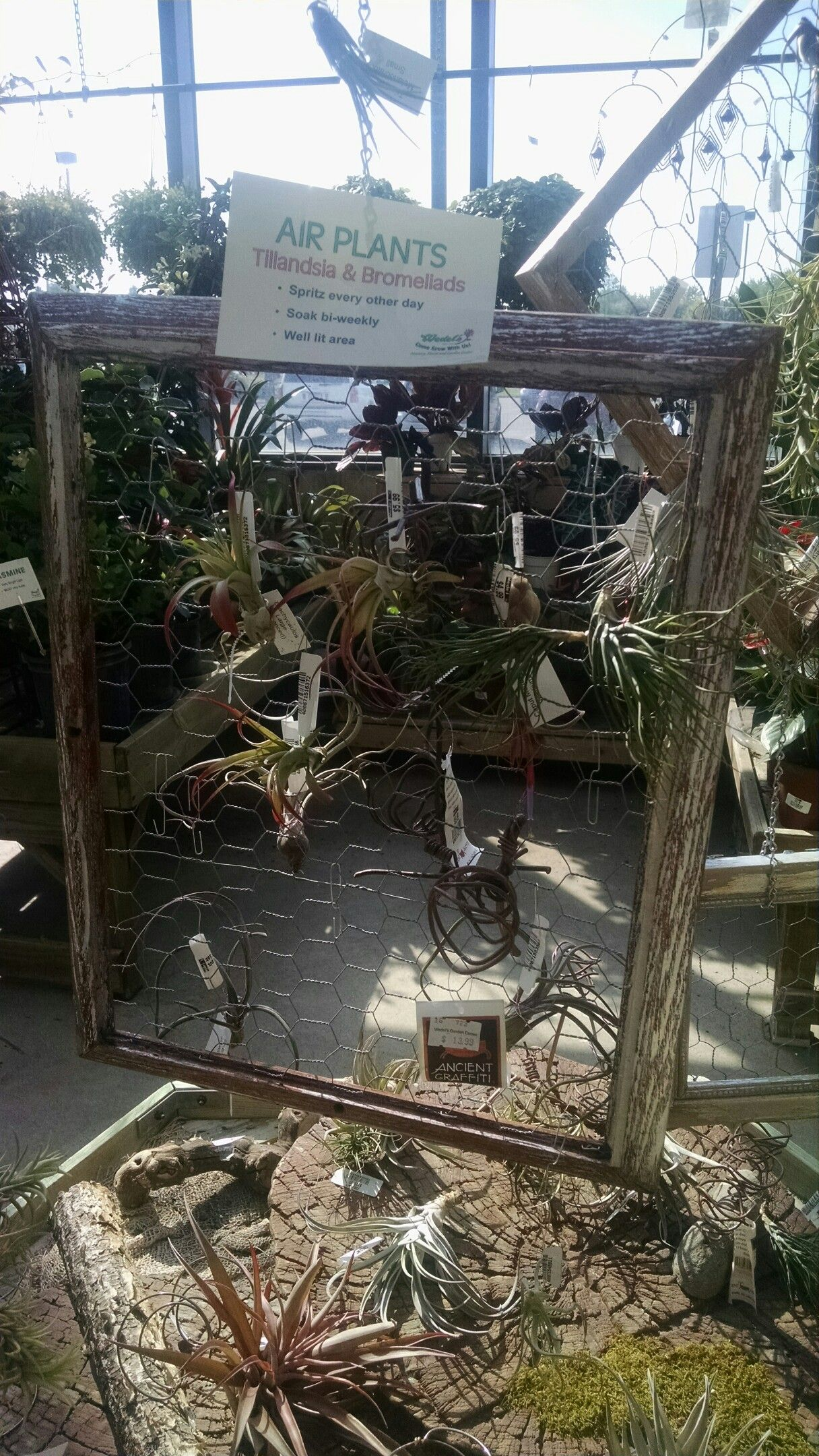 Chicken wire frames for climbing plants | Meg and Bill\'s Wedding ...