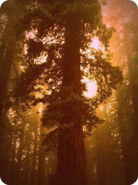 Talltree Pacific Northwest Pacific Coast Nature Beauty