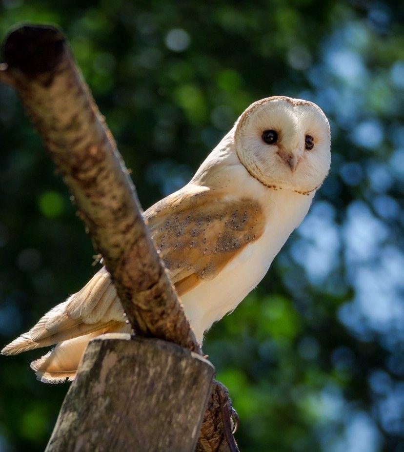 "Photo ""Owl"" by alex_artes"