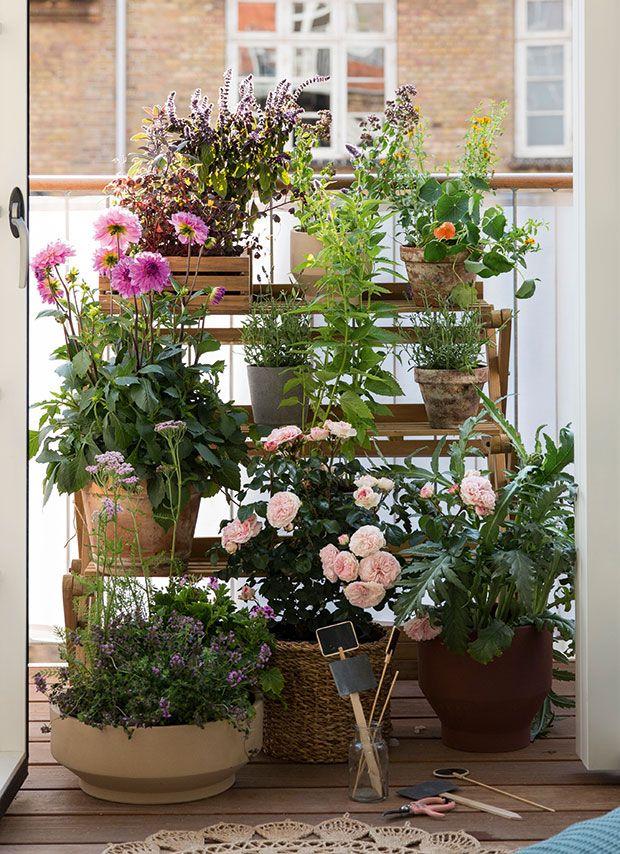 planter på altanen