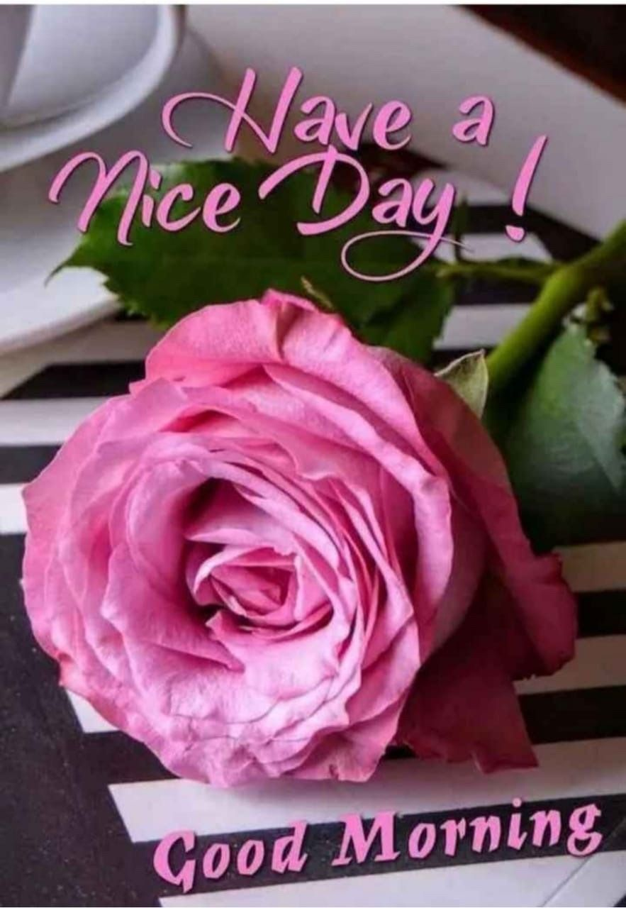 Touchn2btouched In 2020 Good Morning Greetings Good Morning Flowers Good Morning Beautiful Images