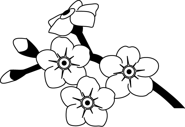 Forget Me Not Flowers Drawings Spring Flower Material Of Tattoo
