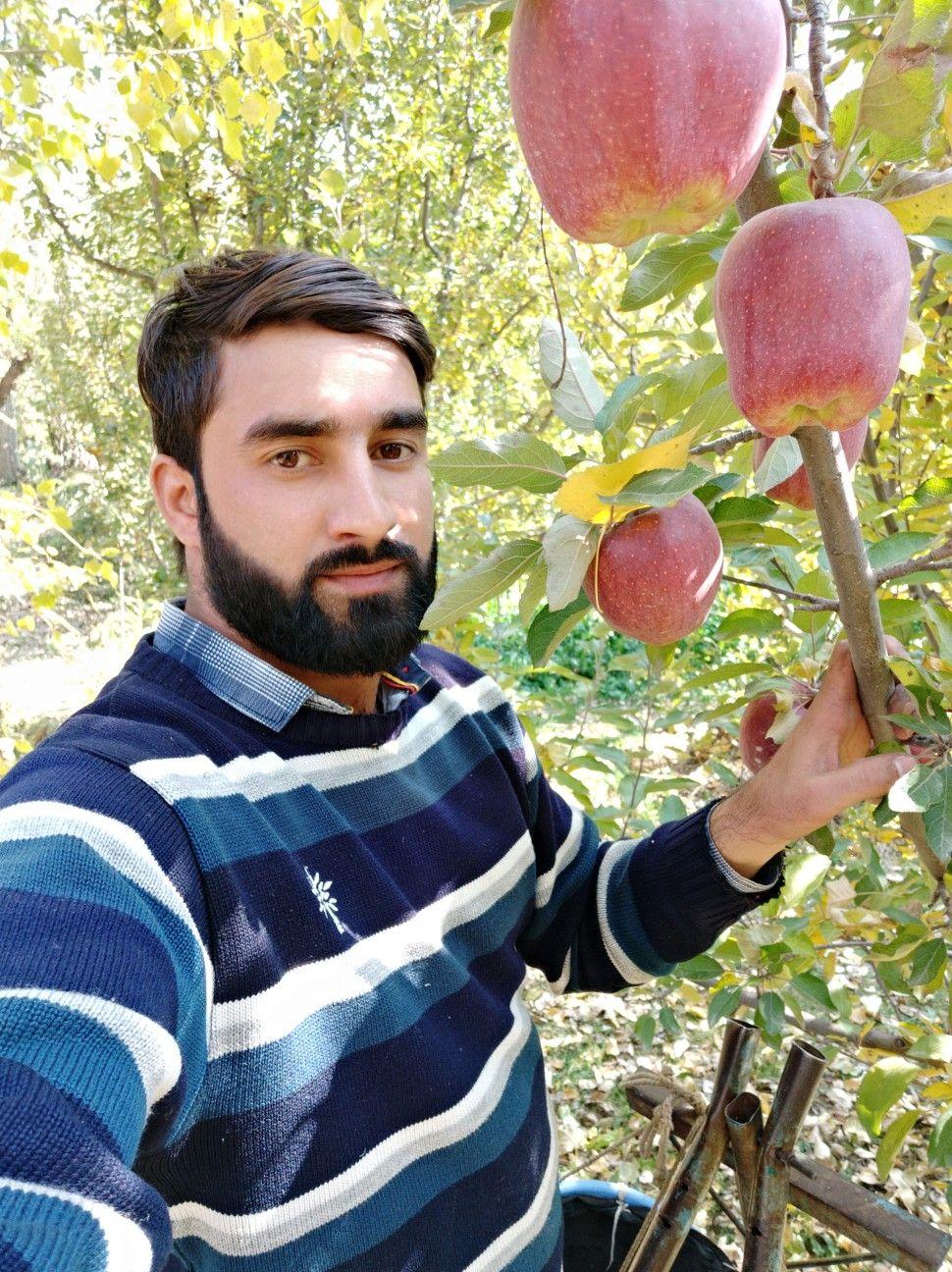 picking apples . Nursing students, Apple, Tree