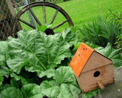 The birdhouse garden has guests | Bird houses, Funky junk ...