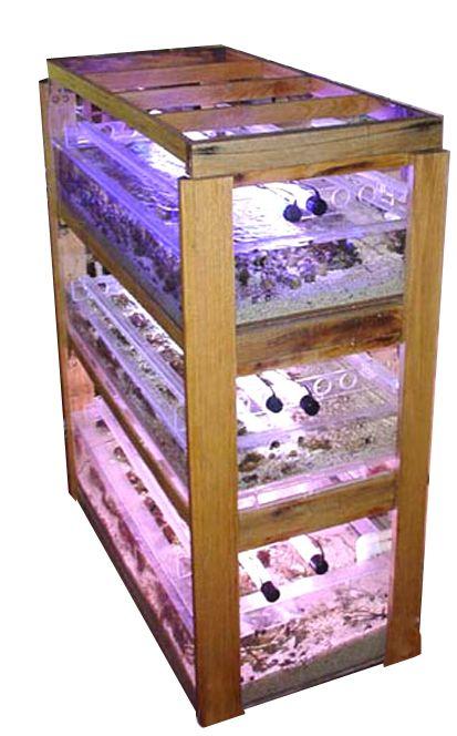 coral farming building aquarium plexiglass   Saltwater ...